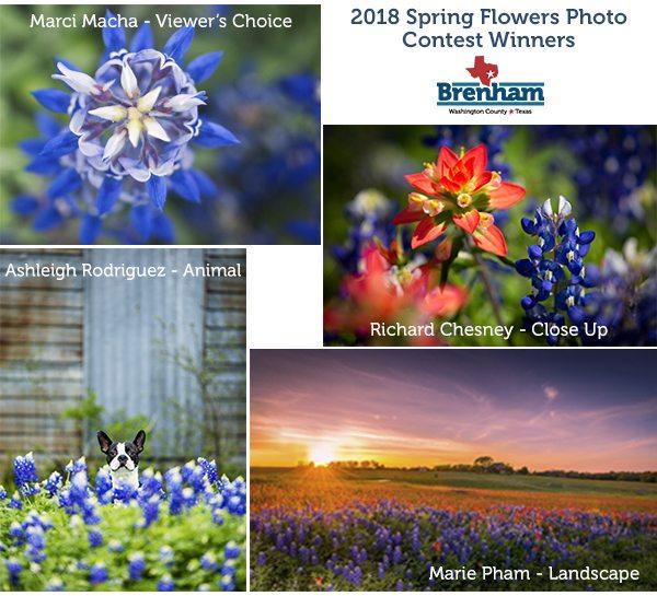 Spring flowers photo contest brenham photo contest bluebonnets spring flowers photo contest 2018 mightylinksfo
