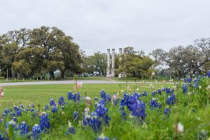 old baylor ruins and bluebonnets